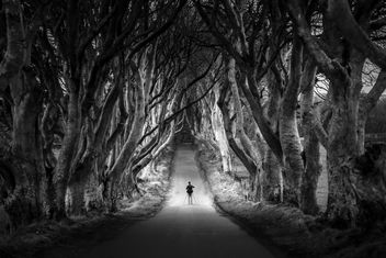 The photographer at the Dark Hedges, Northern Ireland - image #295611 gratis