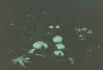 Mushroom Field. - Free image #295621