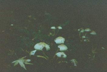 Mushroom Field. - Kostenloses image #295621