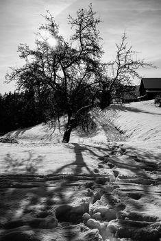 Winter - Kostenloses image #295771