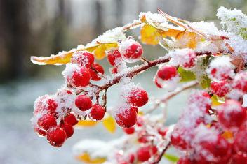 Ice Storm - Kostenloses image #295841