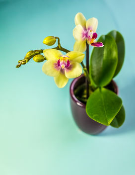 Mini Orchid - Free image #295881