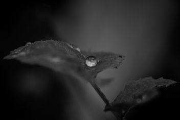 La perla negra - Kostenloses image #295891
