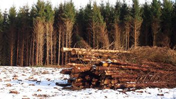 Wooden logs - Free image #296061