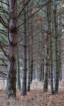 Trees - Free image #296111