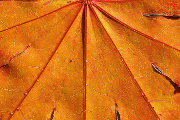 Macro Leaf - Free image #296441