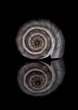 Seashell Spiral End - Free image #296861