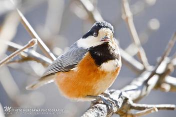 Bird, 2012 - Kostenloses image #297061