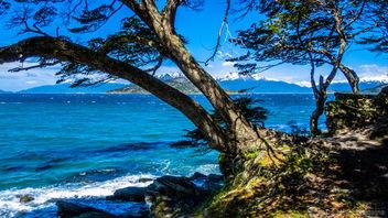 Tierra del Fuego - Argentina - Free image #297341