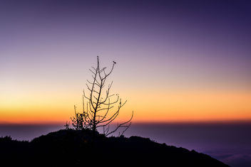 Lonely tree - image #297451 gratis