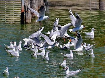 group of seagulls - image gratuit(e) #297571