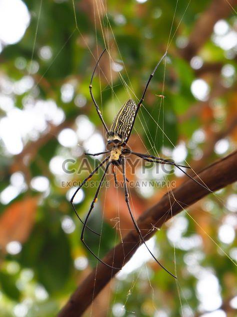 Spinne ein Netz - Kostenloses image #297591