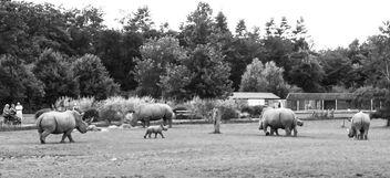 New Rhino baby - Free image #298231