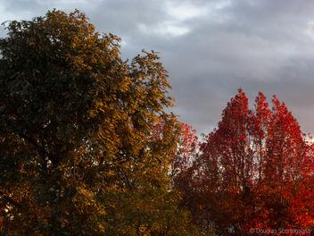 Autumn - Free image #298531