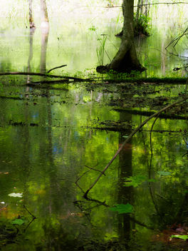 Pond reflections - image #298881 gratis