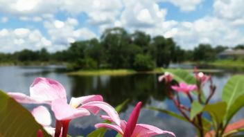 Bokeh Blooms - Kostenloses image #298951