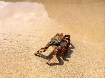 Fernando de Noronha Island crab - Krabbe - Free image #299281