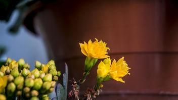 A Little Garden - image #299381 gratis
