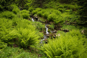 Stream in Ferns - image gratuit #299471