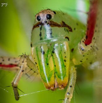 Spider Portrait - Kostenloses image #299491