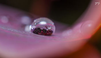 Life in a Drop - image gratuit #299811