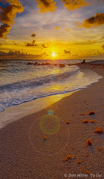 Sand & Seaweed - Kostenloses image #299901