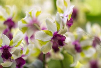 At Singpore Botanic Gardens - image #300091 gratis