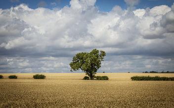 Tree of hearts - Free image #300241