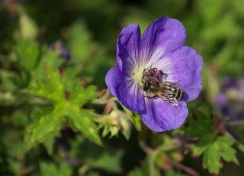 Purple wasp - image #300571 gratis