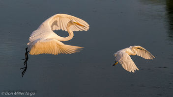 Morning Flight/Fight - image #300651 gratis