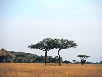 Tanzania (Serengeti National Park) Twin Flat-Top Acacia trees - Kostenloses image #300771