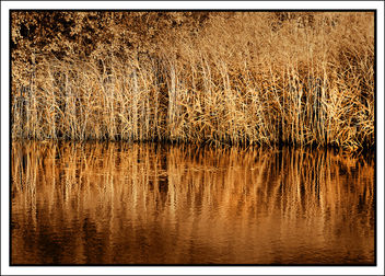 Golden Tones of Autumn - image #301061 gratis