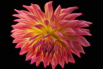 Dahlia glow - Free image #301121