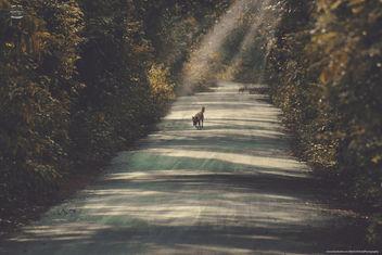wild walk - Free image #301171
