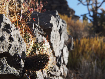 Cactus on rocks - Free image #301231