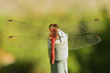 Dragonfly with beautifull wings - бесплатный image #301641
