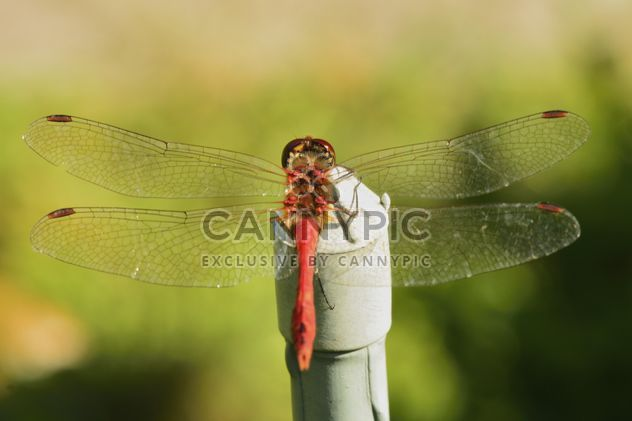 Стрекоза с красивой крылья - бесплатный image #301641