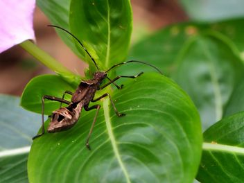 Bug in the garden - image gratuit #301751