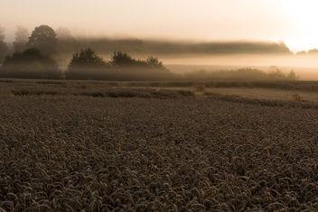 Sunrise - Free image #302491