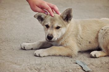 Man stroking a puppy - image #303791 gratis