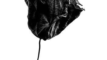 Leaf - Free image #304351