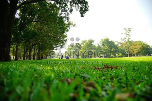Green grass in Vachira Benjatas - Free image #304481