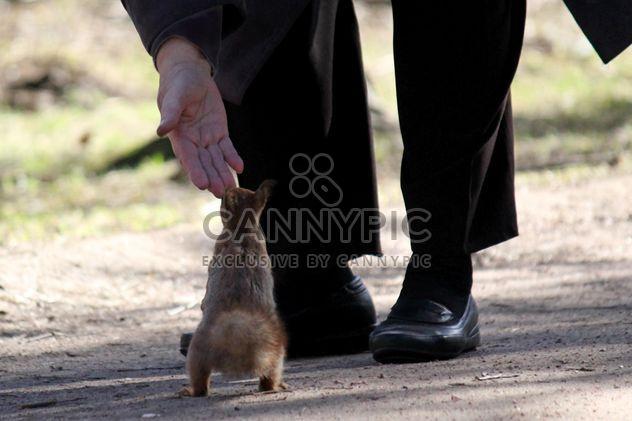 Un homme nourrit d'un écureuil - image gratuit #304501