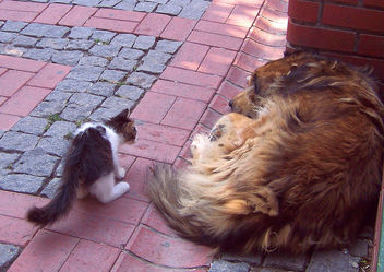 Cat frightened by sleeping dog!! - Free image #305301