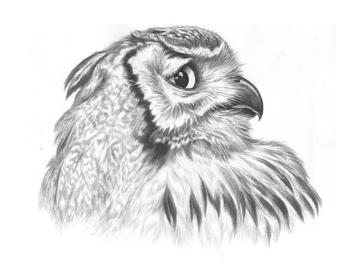 owl - Kostenloses image #306031