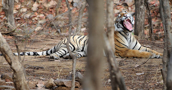 Her Royal Highness, Princess of Ranthambhore - image gratuit #306111