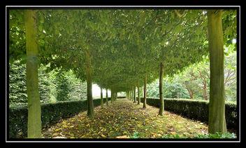 Trees - Kostenloses image #306141