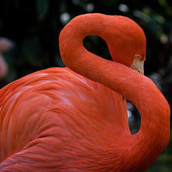 Flamingo 3 - Free image #306441