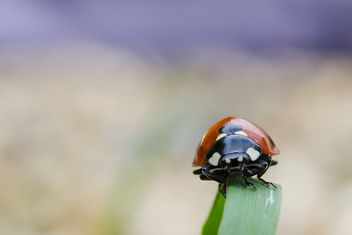 Lady Bird - image #306591 gratis
