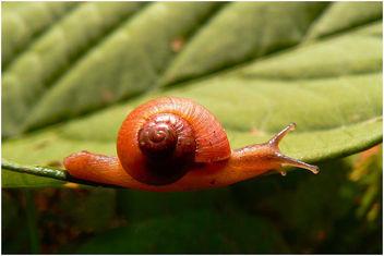 Snail - image #306671 gratis
